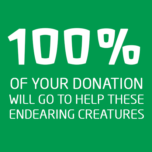 100% of your donation will be going to help these endearing creatures.