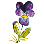 Skin Food Pansy Extract